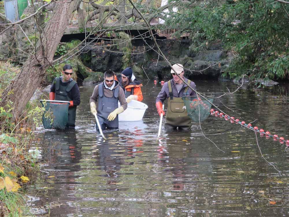 Pêcher à Paris - Association de pêche Paris 75