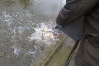rempoissonnement apbv pêche paris